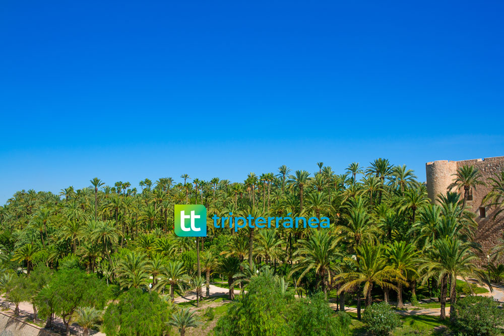 elche-palm-trees-city-costablanca